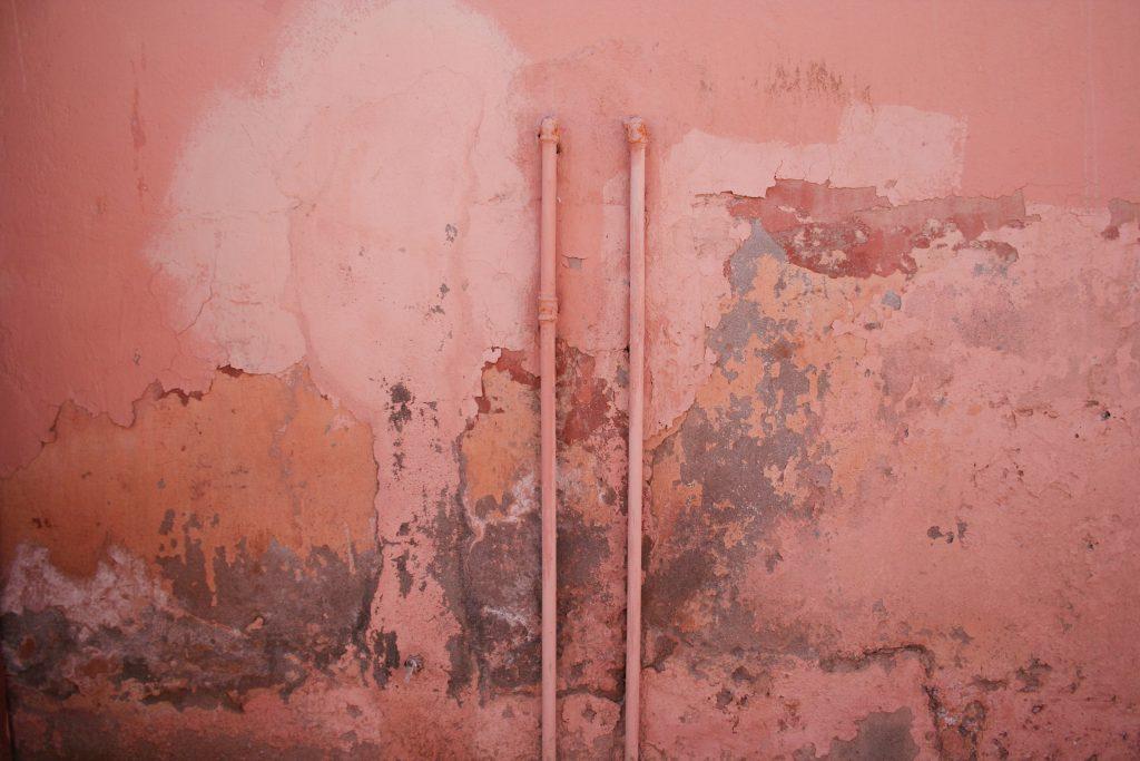 muffa muro