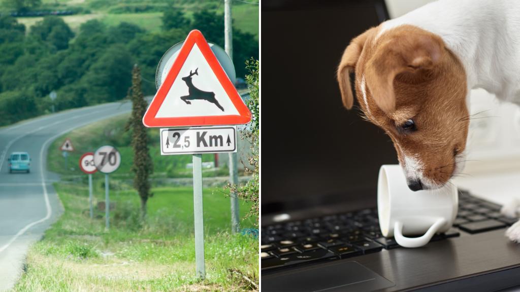 Cartello passaggio animali selvatici in strada e cane che fa cadere tazza di caffè su notebook